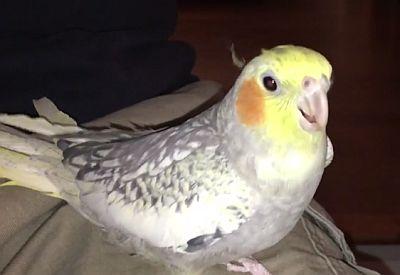 Der Klingelton-Vogel