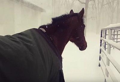 Pferde haben keinen Bock auf Schnee