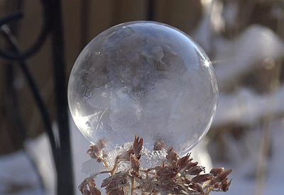 Nature's Snow Globes