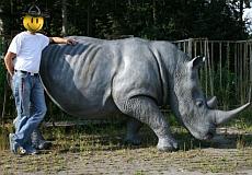 Gigantisches Nashorn
