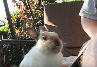 Schonmal einen niesenden Hasen gesehen?