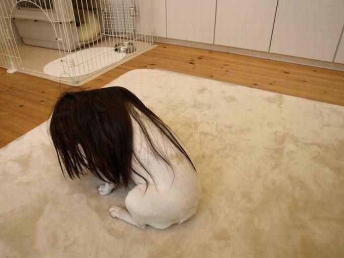 SpassPrediger.com - Picdump #016 - Lustige Bilder und coole Funpics