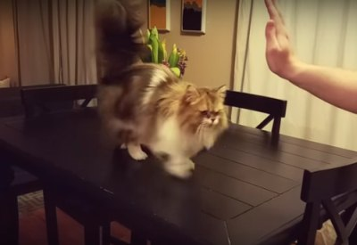Katze gibt astreine High Fives