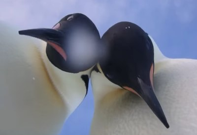 Selfie mit Pinguin