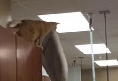 Katze mit stilsicherem Todessprung