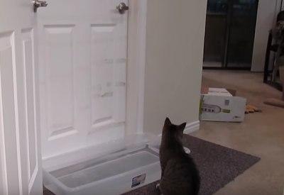 """Katze öffnet Tür trotz """"Wasserfalle"""""""