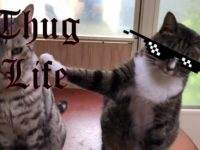 Cat Rat - Thug Life