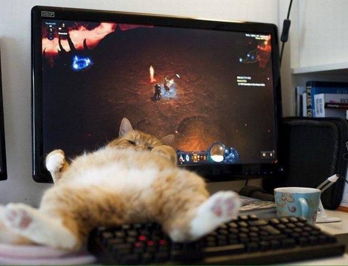 SpassPrediger.com - Picdump #021 - Lustige Bilder und coole Funpics