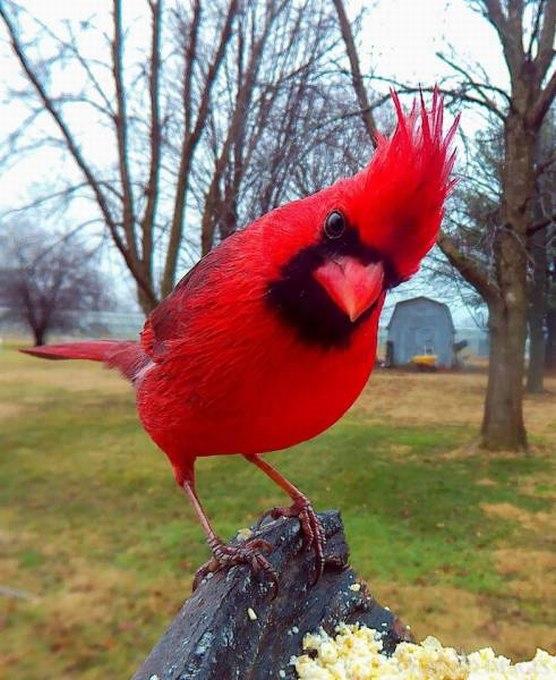 SpassPrediger.com - Picdump #024 - Lustige Bilder und coole Funpics