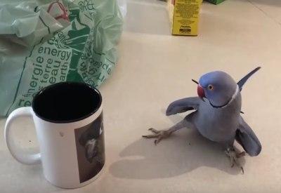 Vogel verliebt sich in eine Tasse