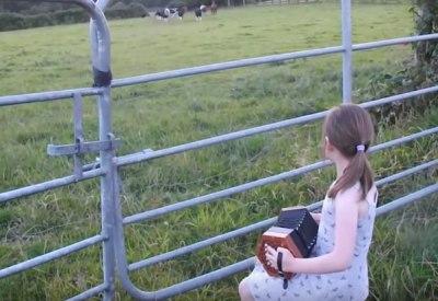 Kind spielt mit einem Akkordeon für Kühe