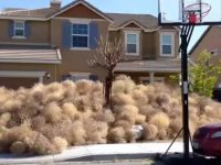 """Tumbleweed""-Invasion"