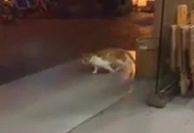 Moonwalk Katze in China