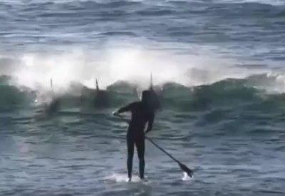 Delfin räumt Stand Up Paddler vom Brett