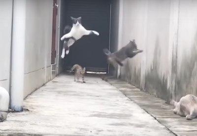 Katze mit wahnsinnigem Run