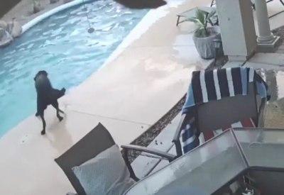 Hund rettet anderen Hund aus Pool