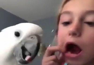 Papagei zieht Milchzahn