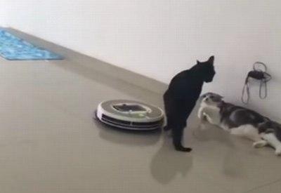 Katze und Saugroboter