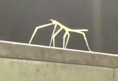 "Insekt tanzt zu ""Tainted Love"""