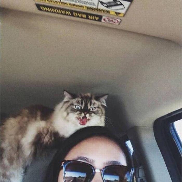 SpassPrediger.com - Picdump #031 - Lustige Bilder und coole Funpics