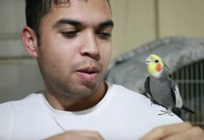Beatbox mit Vogel