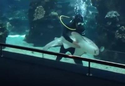 Zebrahai auf Kuschelkurs