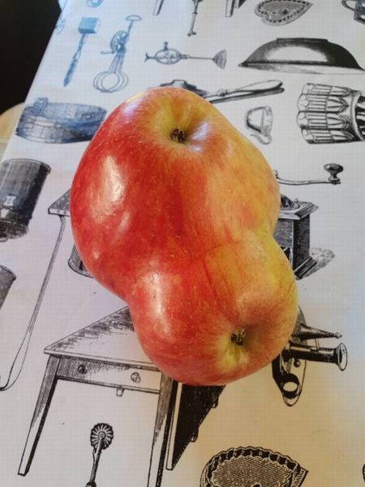SpassPrediger.com - Picdump #036 - Lustige Bilder und coole Funpics