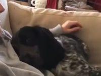 Hund kuschelt - ob du willst oder nicht
