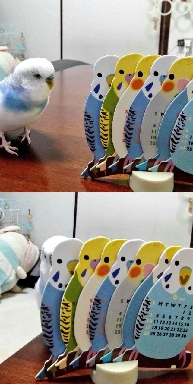 SpassPrediger.com - Picdump #041 - Lustige Bilder und coole Funpics