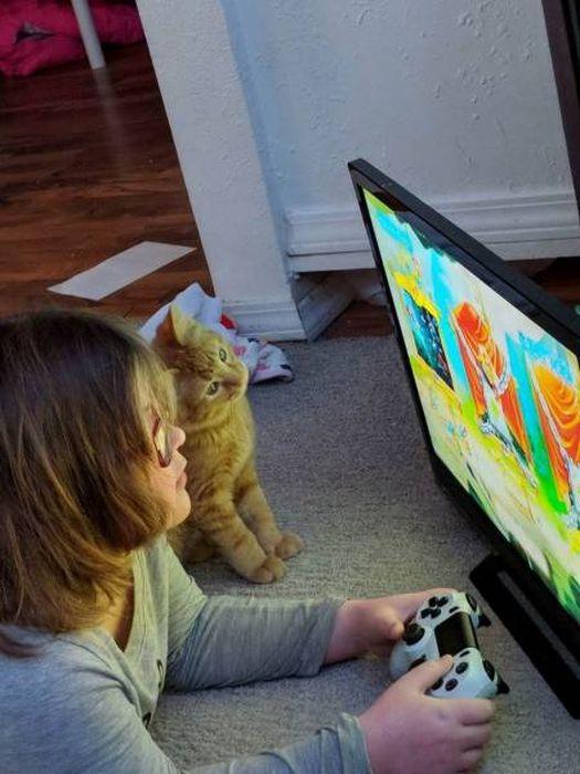 SpassPrediger.com - Picdump #042 - Lustige Bilder und coole Funpics - lustige Picdumps vom Spassprediger