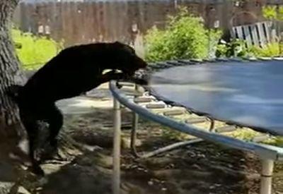 Gelangweilter Hund spielt mit sich selbst