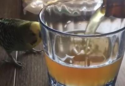 Vogel nimmt Bierbad