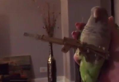 Vogel mit Maschinengewehr