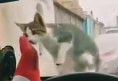 Einfach mal mit der Katze im Auto spielen...