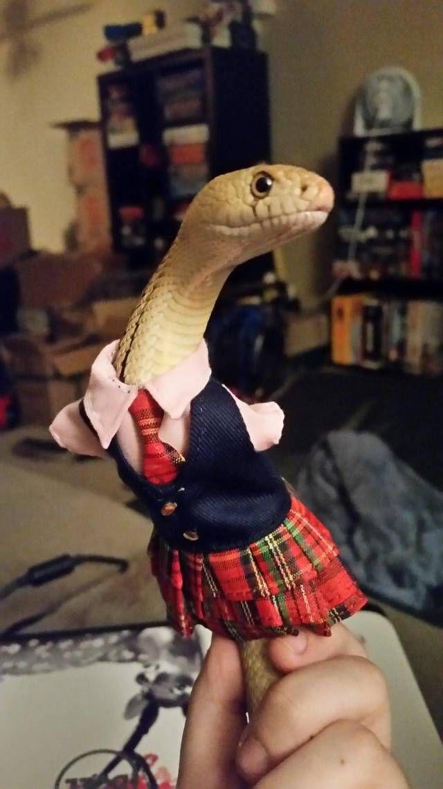 SpassPrediger.com - Picdump #059 - Lustige Bilder und coole Funpics - lustige Picdumps vom Spassprediger
