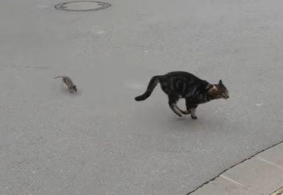 Katze vs. Ratte