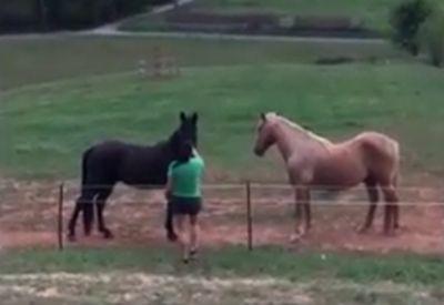 Einfach mal die Pferde erschrecken