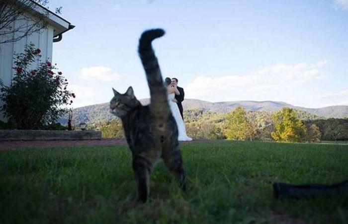 SpassPrediger.com - Picdump #066 - Lustige Bilder und coole Funpics - lustige Picdumps vom Spassprediger