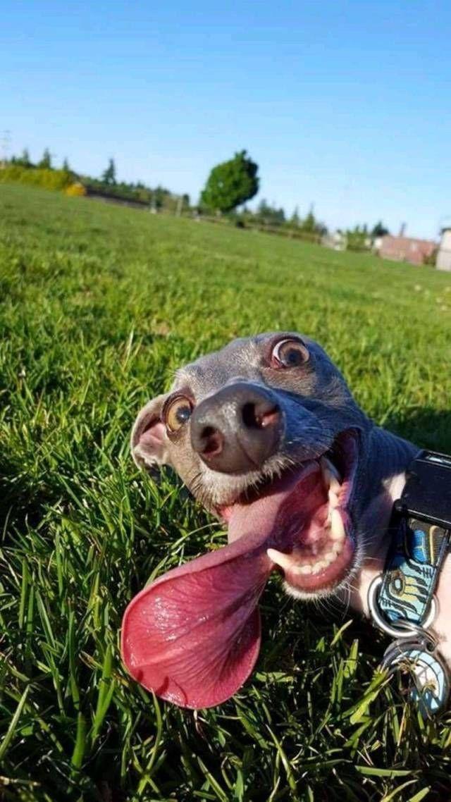 SpassPrediger.com - Picdump #069 - Lustige Bilder und coole Funpics - lustige Picdumps vom Spassprediger