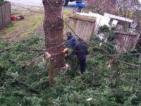 Einfach mal den Baum im Vorgarten fällen