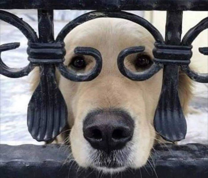 SpassPrediger.com - Picdump #072 - Lustige Bilder und coole Funpics - lustige Picdumps vom Spassprediger