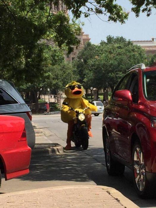 SpassPrediger.com - Picdump #078 - Lustige Bilder und coole Funpics - lustige Picdumps vom Spassprediger