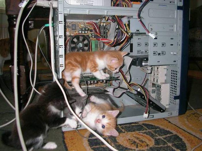 SpassPrediger.com - Picdump #079 - Lustige Bilder und coole Funpics - lustige Picdumps vom Spassprediger