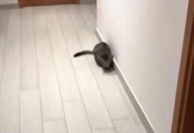 Die Torhüter-Katze