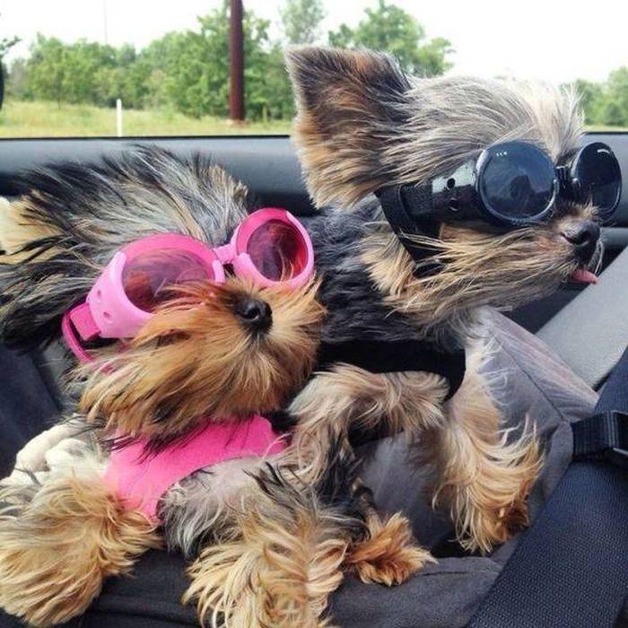 SpassPrediger.com - Picdump #087 - Lustige Bilder und coole Funpics - lustige Picdumps vom Spassprediger