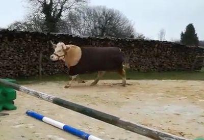 Pferd im Körper eines Stiers
