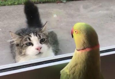Wenn der Vogel die Katze verarscht
