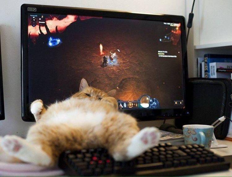 SpassPrediger.com - Picdump #095 - Lustige Bilder und coole Funpics - lustige Picdumps vom Spassprediger