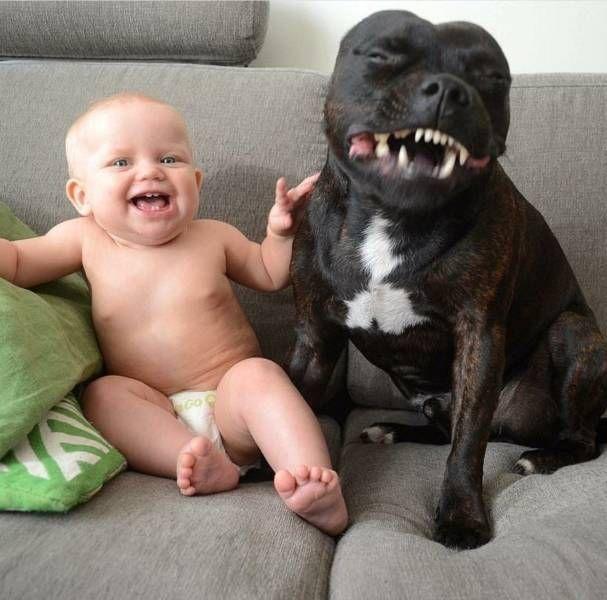 SpassPrediger.com - Picdump #100 - Lustige Bilder und coole Funpics - lustige Picdumps vom Spassprediger