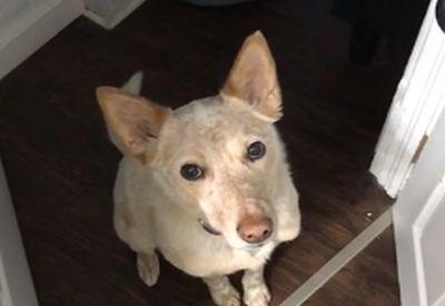 Woran merkst du, dass dein Hund Gassi möchte?